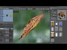 SpeedTree 7 New Features   Subdivision Surfaces, Alembic Export   3D