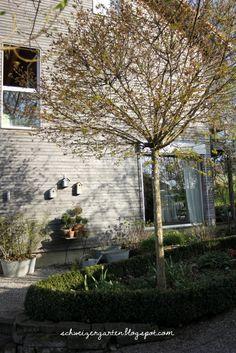 Great Holzfassade Wooden House L rchenschalung Hanglage Gartengestaltung Tierschutzhund Kugelahorn Acer platanoides