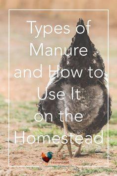Do you have many animals on your homestead? Click here to find out how you can utilize their manure to increase yields in your garden and orchard. Types of Manure | Gardening | Composting