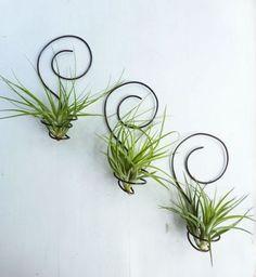plante de aer 4