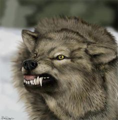 Google Image Result for http://www.cryptomundo.com/wp-content/uploads/wolf1.jpg