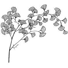 Branch of a ginkgo plant, rubber stamp 3 x 3 Leaf Drawing, Floral Drawing, Plant Drawing, Motifs Art Nouveau, Aquarell Tattoos, Dibujos Tattoo, Tatoo Art, Flower Doodles, Pen Art