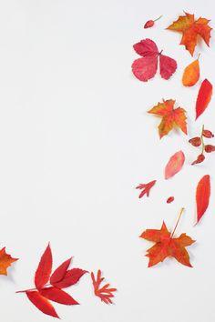 Red Aesthetic Grunge, Aesthetic Vintage, Aesthetic Dark, Fall Wallpaper, Iphone Wallpaper, Wallpaper Quotes, Halloween Wallpaper, Aesthetic Backgrounds, Aesthetic Wallpapers