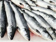 Tough Year Ahead for Uruguay's Fish Exports  For More Details: http://www.agribazaar.co/index.php?page=item&id=1933