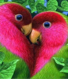 Love Birds pink heart in nature ! Cute Birds, Pretty Birds, Beautiful Birds, Animals Beautiful, Simply Beautiful, Beautiful Pictures, Beautiful Life, Funny Birds, Birds 2