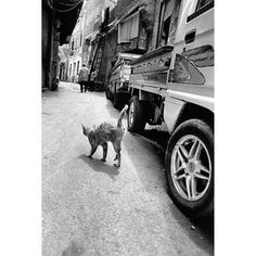 Walter Rothwell(@walter_rothwell) • Instagram 사진 및 동영상 Cairo, Humor, Dogs, Animals, Animales, Animaux, Humour, Pet Dogs, Hand Warmers