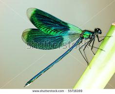 Beautiful bright Dragonfly