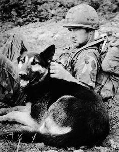 Military Working Dog, Vietnam 1971