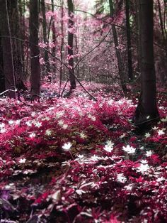 Looks like something from Twlight almost.....sparkly vampires running through pink flowers & trees