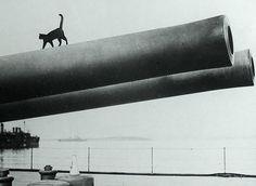 Mascot of the HMS Queen Elizabeth WW1