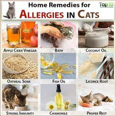 Flea Allergy Dermatitis In Cats Cat Allergies Cat