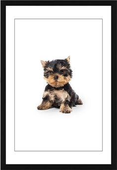 Terrier Puppy Framed Print, Black, Contemporary, Black, White, Single piece, 20 x 30 inches