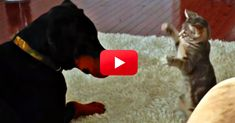 OMG I Cannot Stop Laughing! You Have To See This Hilarious Ninja Kitten Do His Thing! | The Animal Rescue Site Blog