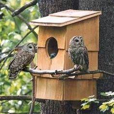 Résultat d'images pour audubon screech owl nest box plans Owl Nest Box, Owl Box, Bird House Feeder, Bird Feeders, Bird House Plans, Barred Owl, Screech Owl, Bird Houses Diy, Bird Boxes