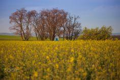 Chapel in the fields - Chapel hidden in the Moravian yellow fields