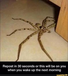 Not gonna lie. I will repost because I am terrified of bugs; especially spiders.
