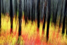 Impressionist Photography or The Art of Suggestion | PhotographyMojo