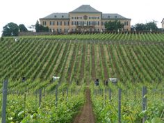 Schloss Johanisberg, the oldest Riesling vineyard in the world can be found in Germany.