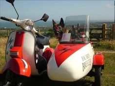 Red & white Vespa P-series with sidecar. And a dog.