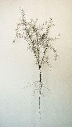 Ben Coutouvidis - Fine leaved plant, Wire sculpture.