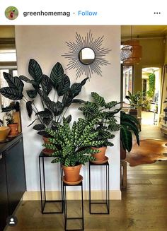 Entryway Decor, Bedroom Decor, Entrance Foyer, Bedroom Bed, Plantas Indoor, House Plants Decor, Living Room Decor With Plants, Indoor Plant Decor, Living Rooms