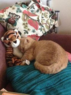 """Lovely-KittyCats, catsbeaversandducks: """"I love you, Tigger. You..."""