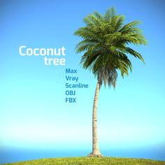 Realistic Coconut Palm Tree 3D Max - 3D Model