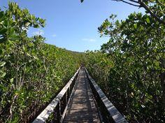 Manglar (Fajardo, Puerto Rico)Mangroves