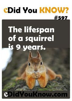 The lifespan of a squirrel is 9 years. Creepy Facts, Wtf Fun Facts, True Facts, Funny Facts, Random Facts, Fun Facts For Kids, Fun Facts About Animals, Animal Facts, Facts You Didnt Know