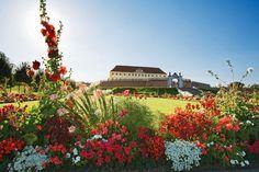 Blühende Gärten vor der Kulisse des Schloss Hof im Marchfeld. #Weinviertel Austria, Felder, Homeland, Mansions, House Styles, Backdrops, Manor Houses, Villas, Mansion
