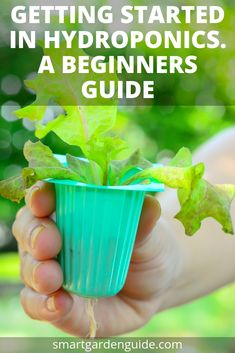 started in hydroponics. Hydroponics for beginners. This guide will tell you all about growing plants with hydroponics at home. Learn about the different types of hydroponics and how to grow plants successfully using this amazing cultivation technique. Home Hydroponics, Hydroponic Farming, Hydroponic Growing, Aquaponics System, Growing Plants, Hydroponic Tomatoes, Hydroponic Systems, Aquaponics Plants, Gardening For Beginners