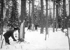Logging in Finland in the early 1900's  Tukkipuunkaatoa 1900 luvunalussa