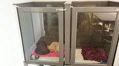 After photo of the newly constructed kennels - the staff dogs look very comfortable