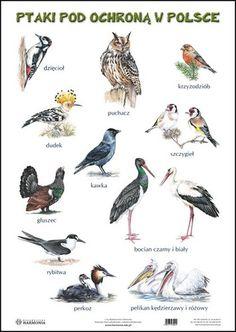 Podobny obraz Montessori, Diy And Crafts, Wildlife, Birds, Education, Children, Animals, Poland, Geography
