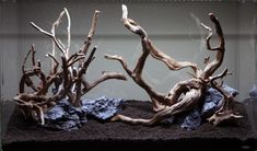Aquascaping season is officially here. This time around, a driftwood layout begins in a Cube Garden Superior 60-P.