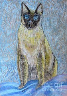 Siamese Cat. Pastel drawing by Caroline Street.