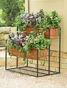Planter for herbs
