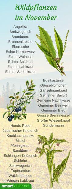 Im November findest du noch einige wilde Früchte und ausgewählte Kräuter. Jetzt fängt aber die Wurzelsaison an. Finde heraus, welche du im November erntest!