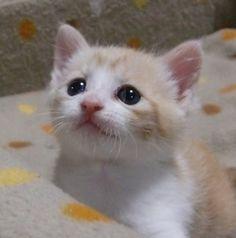 かわいすぎる子猫ちゃんに、心も体もとろけたい! 最強の1枚お待ちしています。   名前は「くう」です。よろしくにゃ。