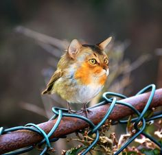 The Internet Has Transformed Felines And Birds Into Hybrid Animals