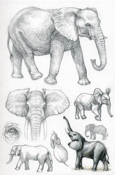 Better Drawing Animal sketchbook project Page number 1 - African elephant This is first part of my little project where I am filling up one of my sketchbooks with animal studies. My goal is to get better in drawi. Elephant Sketch, Elephant Illustration, Elephant Art, African Elephant, Elephant Drawings, Elephant Crafts, Draw An Elephant, Elephant Anatomy, Illustration Art