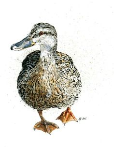 Mounted Limited Edition Giclee Print of Female Mallard by Watercolor Bird, Watercolor Animals, Watercolor Paintings, Watercolors, Duck Drawing, Painting & Drawing, Hippo Drawing, Duck Illustration, Illustrations