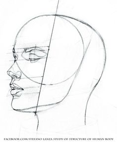 https://www.facebook.com/Stefano-Lanza-Study-of-structure-of-human-body-1479159998770051/ #anatomy #head #drawing #draw #pencil