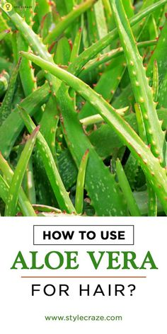 Aloe vera for hair treatment is one of the best ways to mositurize and care at the same time. Here are some ways that you can use aloe vera for hair. Read on to know more (Best Shampoo Aloe Vera) Aloe Vera Gel For Hair Growth, Aloe Vera For Hair, Natural Hair Care, Natural Hair Styles, Natural Beauty, Beauty Care, Beauty Hacks, Beauty Tips, Beauty Ideas