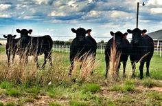 Ever get the feeling your being watched.... cattle are nosey...but I do love our babies.