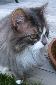 Best cat ever!: Småpus