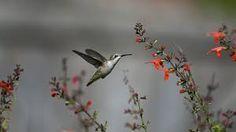 Resultado de imagen de flor+colibri