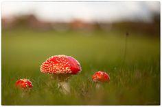 autumn swirl / 500px Stuffed Mushrooms, Autumn, Stuff Mushrooms, Fall Season, Fall