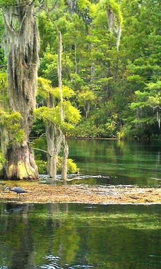 Wakulla River - Tallahassee, Florida What a great time we had kayaking crystal clear river!