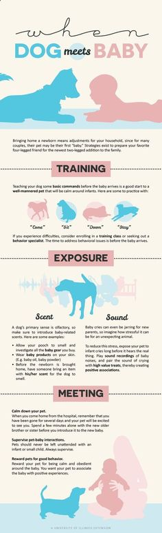 When Dog Meets Baby infographic - tips and tricks for new parents! (scheduled via www.tailwindapp.com) - Baby Stuff Weekly